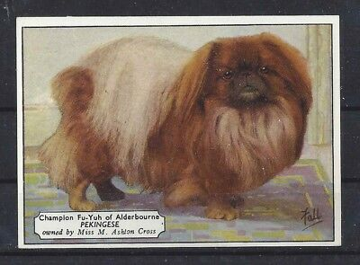 1938 UK Dog Art Photo Hand Colored Ardath Cigarette Card Champion PEKE PEKINGESE