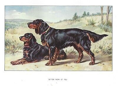 Rare 1930 Art Francois Castellan France Dog Watercolor Print GORDON SETTER