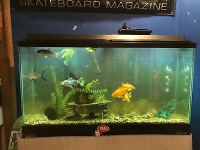 FISH TANK/AQUARIUM | 65 gallon with stand | Complete Set-Up!