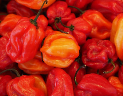 HOT JAMAICAN Red CHILLI SCOTCH BONNET  25 seeds HERITAGE extremely hot chilli