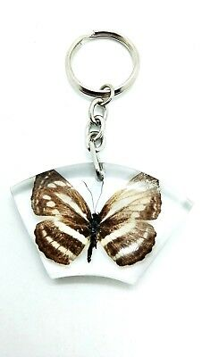Real Brown Butterfly Zebra in Clear Resin Collectible KeyRing KeyChain insect