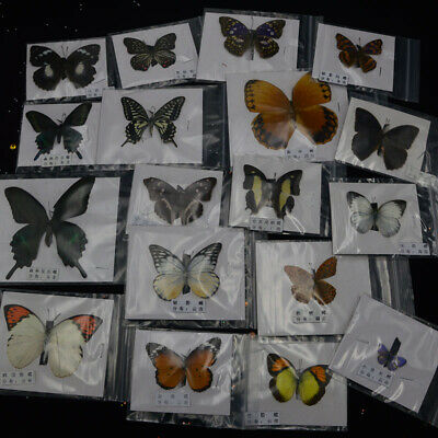 1Pcs Natural Unmounted Butterfly Specimen Artwork Material Decor &&
