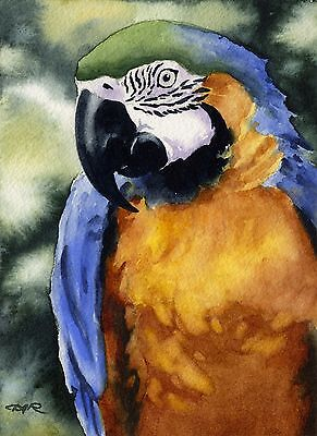 BLUE AND GOLD MACAW Watercolor 8 x 10 Art Print Signed by Artist DJ Rogers