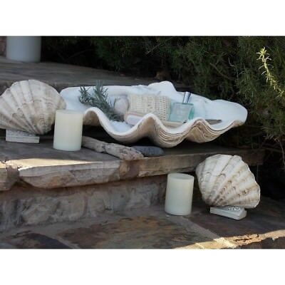 Large Clam Shell Textured Gypsum Handcrafted Fossil Finish Realistic Display NEW