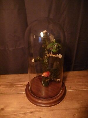 Old Antique Vintage Taxidermy Birds in Glass Dome Bell Jar Victorian