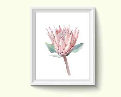 Protea Flowers Watercolor Painting Poster Art Print Q41