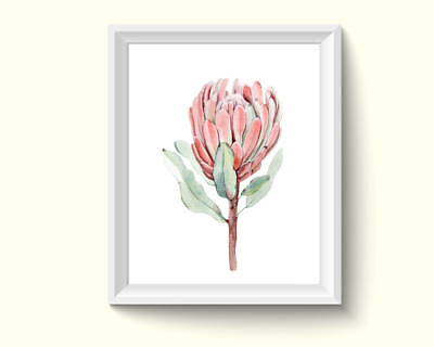 Protea Flowers Watercolor Painting Poster Art Print Q42