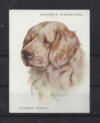 1928 UK Arthur Wardle Dog Art Head Study Player Cigarette Card CLUMBER SPANIEL