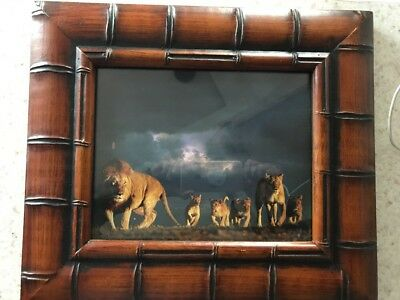 African Lion Picture With Frame