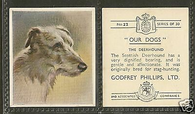 1939 UK Our Dogs Dog Art Head Godfrey Phillips Cigarette Card SCOTTISH DEERHOUND