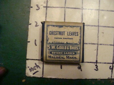 unused old store stock --S W GOULD & bros -- CHESTNUT LEAVES