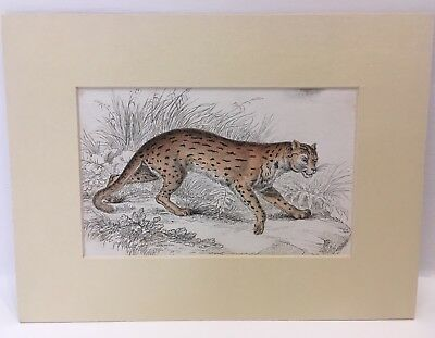 Antique Original Victorian Lithograph Picture Mounted On Card Hand Coloured