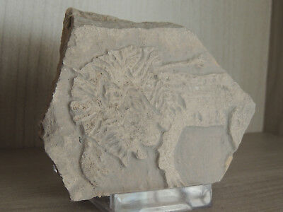 Antique Stone Fragment With Graffiti,hunted Lyon On Relief
