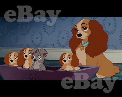 Rare! WALT DISNEY'S LADY AND THE TRAMP Cartoon Color 8 X 10 Photo #1 PUPPIES