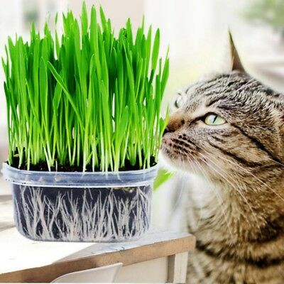 400Pcs Green Digestive Crystal Cat Grass SeedsHealthy Treat Cat Plant Seed New
