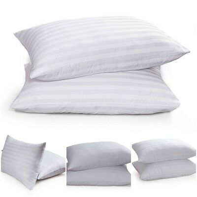 egyptian cotton pillows bounce back deluxe bedding direct. Black Bedroom Furniture Sets. Home Design Ideas