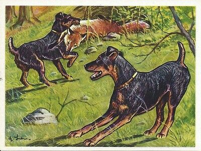 1952 Dog Art Print Austria Tobacco Company Bildwerk JAGD GERMAN HUNT TERRIER
