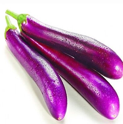 Eggplant Long Purple (75+ Seeds) HEIRLOOM