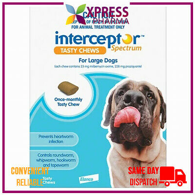 Interceptor Spectrum Large Dogs Allwormer 22 to 45 kgs Blue chews wormer XPRESS