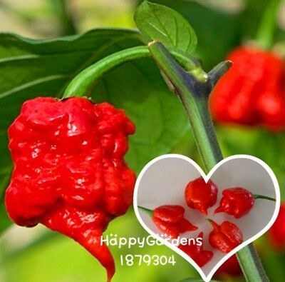 100 Seeds: Carolina Reaper hot pepper