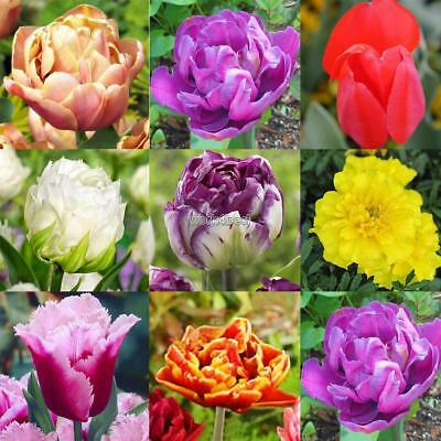 100pcs Mixed Color Rare Parrot Tulip Bulbs Seeds Home Garden Decor Gracious WST