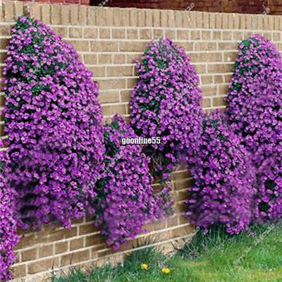 100pcs ROCK CRESS CASCADE MIX SEEDS Aubrieta cultorum hybrida ROCKERY FLOWER bdc