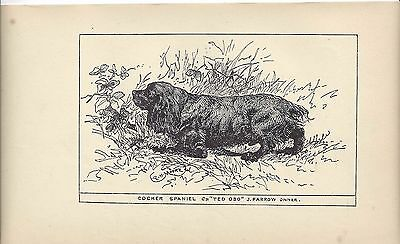 1900 UK Original Dog Art Pen Ink Print RH Moore Champion SUSSEX FIELD SPANIEL 3