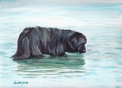 Newfoundland Dog Art Original Watercolor Painting Matted Signed
