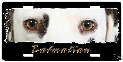 """Dalmatian liver  """"The Eyes Have It""""  License Plate"""
