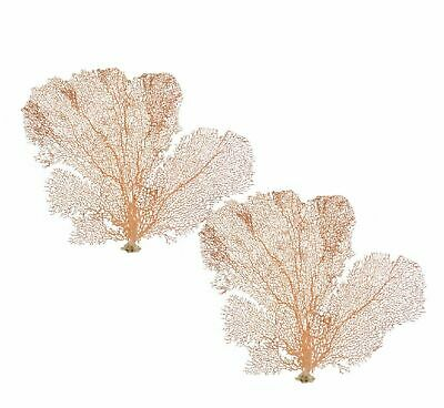 """2 Natural Red Sea Fans 7-10"""" (Set of 2) Small Dried Coral Red SeaFan"""
