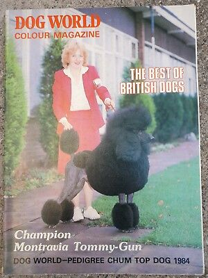 Dog World Magazine 1984! Hund Champion Zucht Breed Spektakulär British Rare