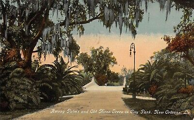 Postcard LA New Orleans Among Palms Old Moss Trees in City Park Vintage PC