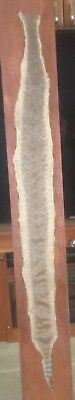 Western Diamondback Rattlesnake Skin 58 Inches Long-6 Inches Wide.