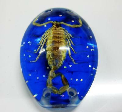 scorpion  jewelry insect yellow  scorpion smart blue scorpion beades  new02