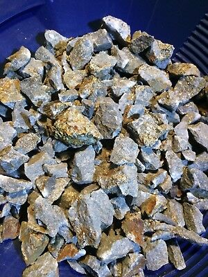 Unsearched Gold/Silver Ore Paydirt Concentrate w/placer Gold 20+Nuggets Added
