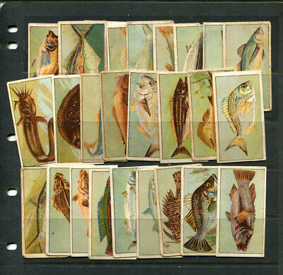 Cigarette Cards Vintage Navy Cut Vice Regal  Part-Lot  Fish X 26 Cards Lot 106
