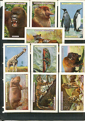 Cigarette Cards Vintage  Players Navy Cut Natural History X 10 Cards Lot 112