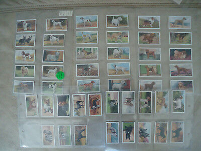 Cigarette Cards 1936  A Series Gallaher Complete Set Of Of Dogs X 48  Cards