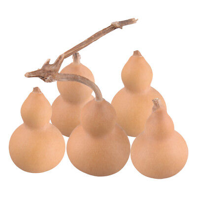 5Pcs Natural Gourds Bottles Dried & Clean Decor DIY Material Toy Craft Gourd