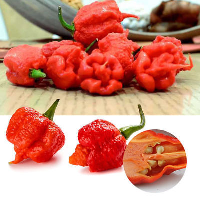 50pcs Super Hot Rare Carolina Reaper Chilli Pepper Vegetable Seeds Garden Decors