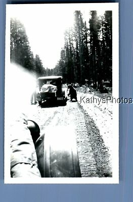 Found Vintage Photo A_0490 View Of Bear In Road On Side Of Old Car