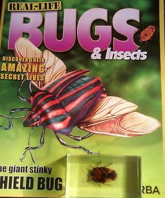 Real life bugs and insects giant shield bug