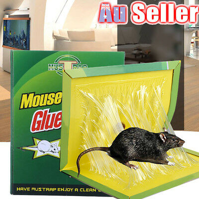 Mouse Rat mice Bait Rodent Traps Catcher None Toxic