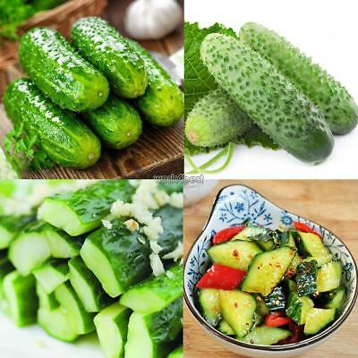 30pcs/Bag Cucumber Masha F1 Russian Vegetable Seeds Home Garden Planting WST