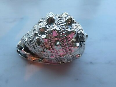 Silver covered Sea Shell