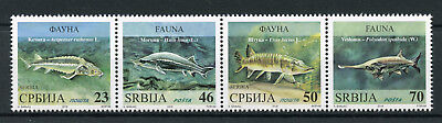 Serbia 2018 MNH Fish Paddlefish Sterlet Beluga Pike 4v Strip Fishes Stamps