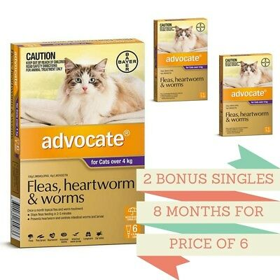 Advocate Flea & Worm Control Cats over 4kg - 6 Pack + 2 BONUS Singles