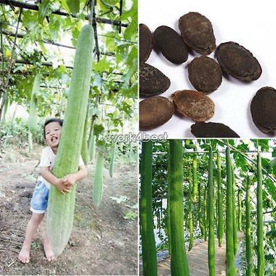 10Seeds Garden Vegetables Outdoor Plant Delicious Giant Loofah Seeds WST
