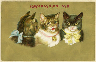 Gold Background Three Pretty Bow Kittens Cats Vtg Antique Postcard
