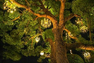 Chandelier Tree Photo. Nature. Tree. Landscape Photography. Fine Art prints.